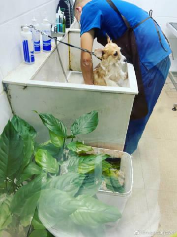 洗澡打疫苗 慈溪市