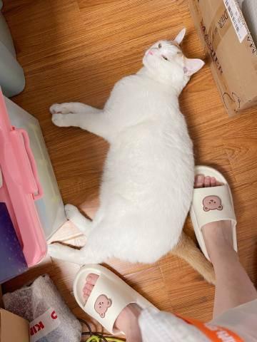 到家了,换好鞋,袋袋跑来往我跟前一倒...