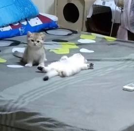 会有猫的!✧ฅ՞ﻌ՞ฅ