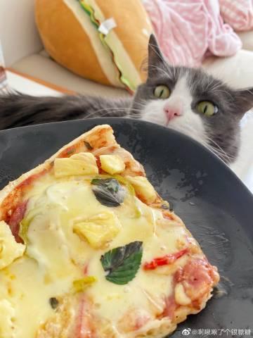 萌宠图片医生妈妈做的pizza和炒面-萌宠
