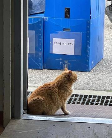 啊 某位猫咪傻瓜给片场流浪猫...