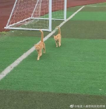 学校的俩只猫咪 他们俩个完全的复制粘贴...