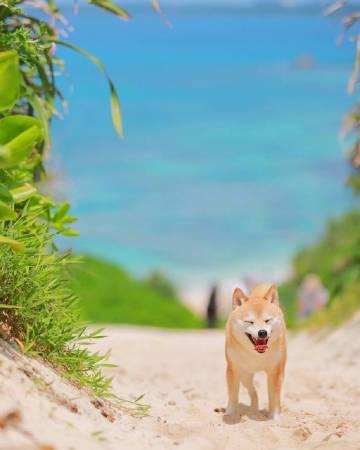 萌宠图片狗子的夏天-萌宠