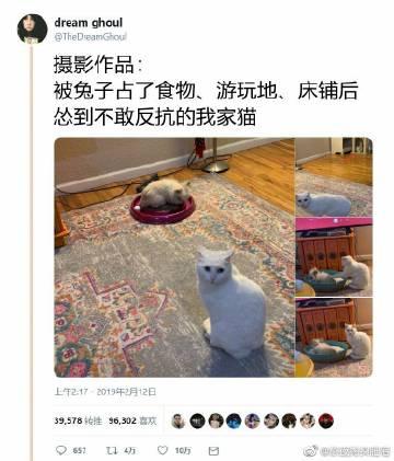 萌宠图片猫咪:妈!你管管他啊!、-萌宠