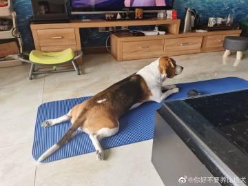 #读者来稿# 狗是不是在学我做瑜伽?