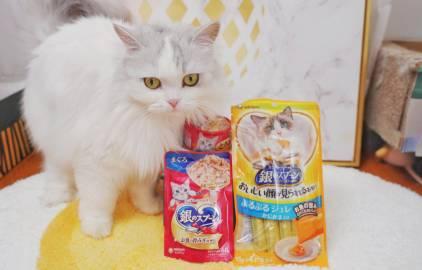 萌宠图片夏天猫咪的饮食应该注意什么...-萌宠