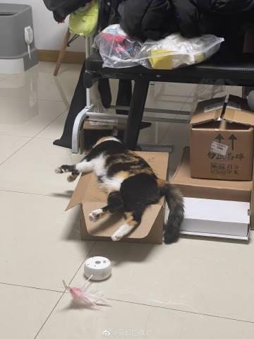 这猫每天就这样懒着,这正常吗?