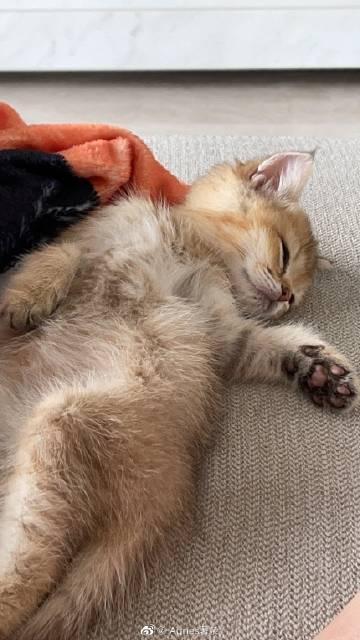 一己弟弟各种各样的睡姿太可爱了吧