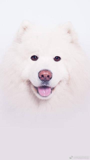 萌宠图片#宠物美容# 最萌的东西之一...-萌宠