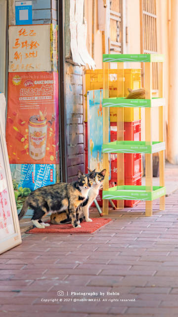 萌宠图片城市与猫咪街头巷尾里的小可爱-萌宠