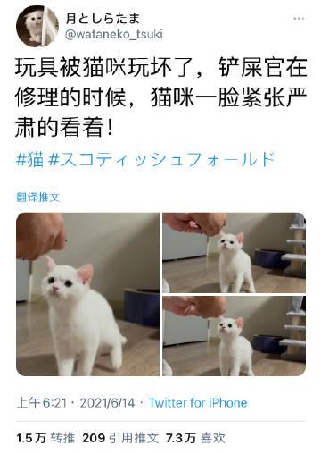 猫:你能不能行?可别再给我修坏喽!
