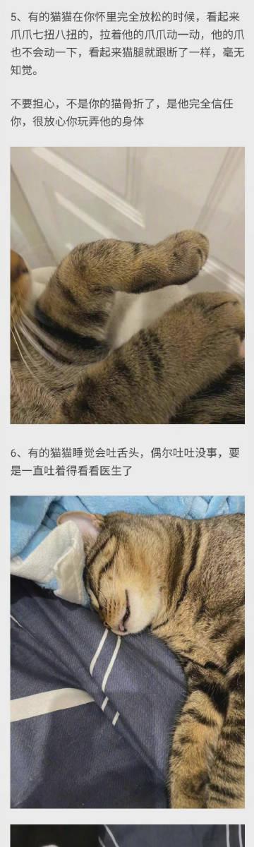 小猫咪真是太可爱 ,养猫必须知道...
