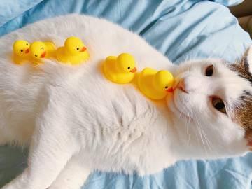 不准吃小鸭子著名网白铁锤