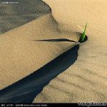 沙漠中的励志图片